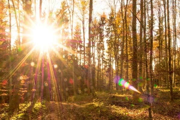 Bild: Goldene Waldlichtung für La MERITO`- Feinstoffliche Reinigung von Orten und Plätzen, Website: daniela-lasinger.at