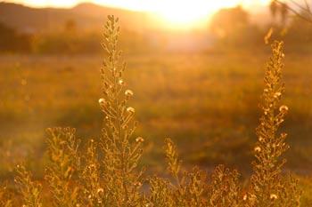 Bild: Gräser getaucht in goldenes Sonnenlicht - Beitragsbild für Philosophie von Daniela Lasinger