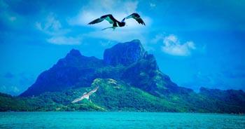 Bild: Das Bild ist in blaue Farbe getaucht und zeigt ein türkises Meer vor einer grünen Insel mit zwei großen Vögeln, die sich vor der Insel in die Lüfte erheben. Beitragsbild für den Blogartikel zum Domainumzug von meerestanz.at auf daniela-lasinger.at. Foto by pixabay.com.