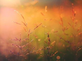 Bild: In goldenes Sonnenlicht getauchte Gräser. Beitragsbild für Blogartikel. Photo by Aaron Burden on Unsplash.